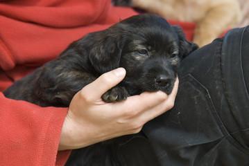 Hundewelpe saugt an Finger