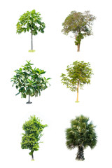 Collection trees on white background of isolated