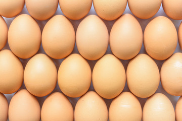 Abstract egg of chicken background