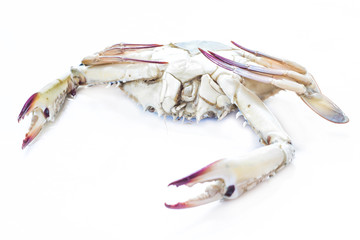 Fresh blue crab on white background for cooking.