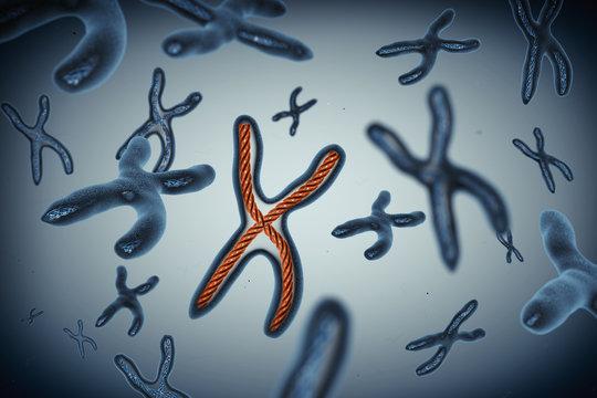 Many Chromosomes. 3d Rendering