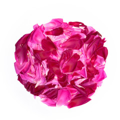 Decorative element of Pink and Maroon petals of peony flowers