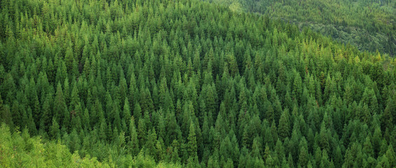 Fototapeten Wald Aerial view of huge green fresh healthy spruce tree forest, panorama texture background pattern