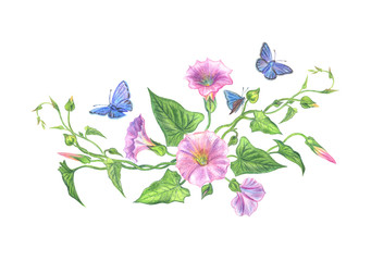 Bouquet of pink bindweed with blue butterflies, watercolor illustration.
