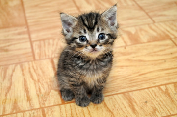 a cute small kitten looking