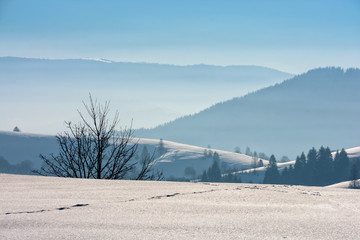 foggy morning in winter mountains