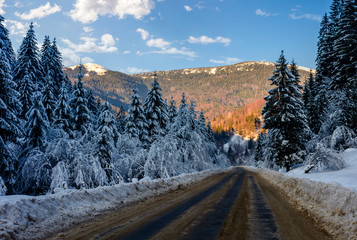 snowy road through spruce forest at sunset