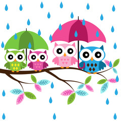 Four colorful owls with umblerra sitting on the branch on a rain background