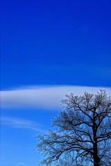 Небо и дерево
