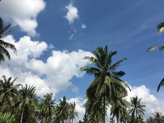 Blue sky and clouds and palm trees tropical scenery.