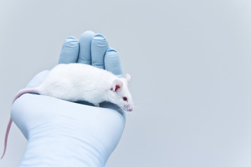 Laboratory experimental mouse on the researcher's hand