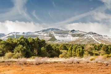 Pinar y montañas de la Sierra del Teleno, Tabuyo del Monte, León, España.
