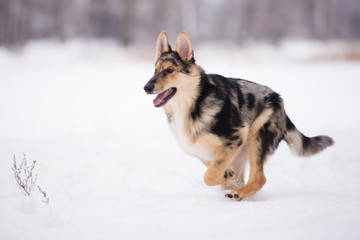 happy mixed breed puppy running outdoors in winter