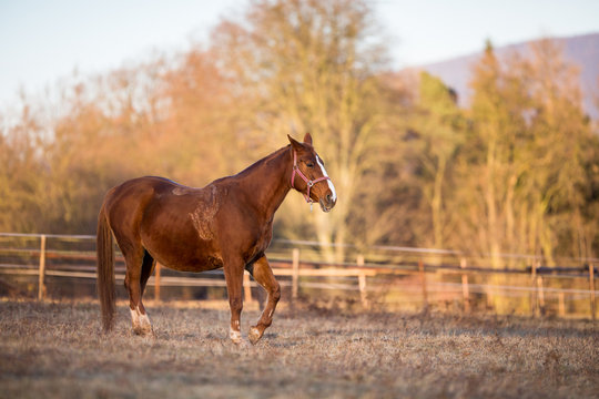 Horse on pasture in warm evening light