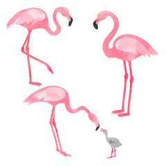 Set of watercolor flamingos isolated on white. Vector illustration of flamingo with chick.