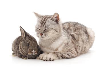 Cat and rabbit.