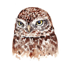 Watercolor realistic owl. Hand drawn illustration