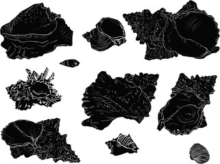 ten black shellfishes sketches isolated on white