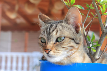 Young cat sitting in the flowerpot