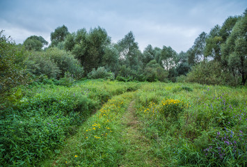 Path through field and forest, overgrown with grass and flowers against a dark sky