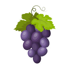 Fototapete - Bunch of wine grapes icon in cartoon style isolated on white background. Spain country symbol stock vector illustration.