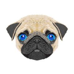 pug dogvector illustration