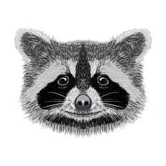 racoon vector illustration