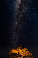 Starry sky and Milky Way arc, with details of its bright colorful core, captured from green oasis in the Namib desert, Namibia, Africa. Adventures into the wild.