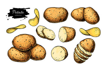 Potato drawing set. Vector Isolated potatoes heap, sliced pieces and chips. Vegetable
