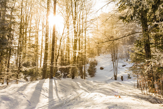 Sunbeams breaking through the icy trees on a winter trail.