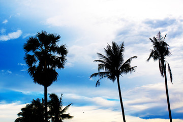 nice palm trees in the blue sky. Coconut palm trees