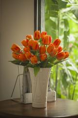 Indoor Tulip Flower