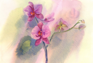 pink orchid branch watercolor backgroung