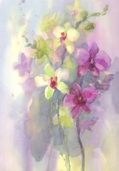 pink white orchid branch watercolor backgroung