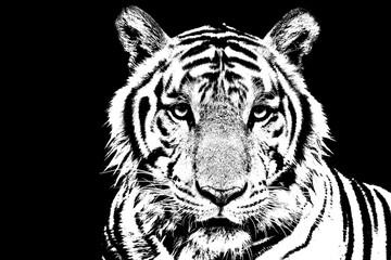 Tiger stencil art