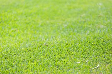 Grass background. Macro shot