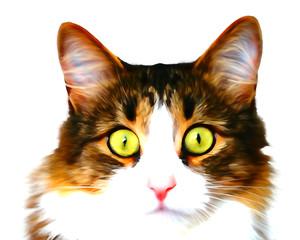 The kitten looks