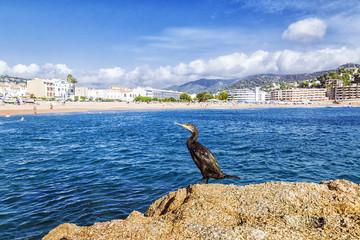 coastline in Tossa de Mar, Spain