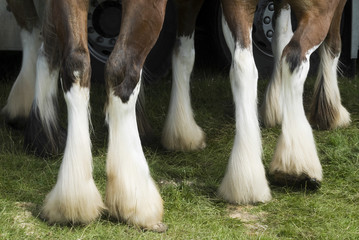 Close-up of horses legs.