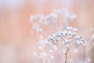 Pastel plant background