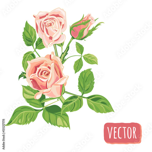 Group of roses pink flowers and bud green leaves on white group of roses pink flowers and bud green leaves on white background digital mightylinksfo
