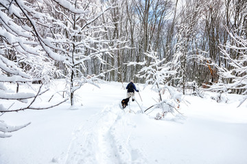 unknown man party with his dog walking in a snowy landscape in