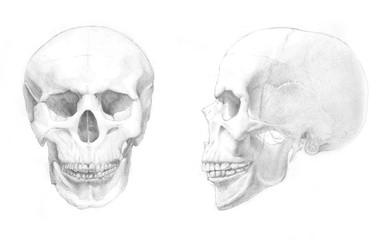 Pencil drawing of skull