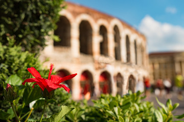 Flower in front of Colosseum