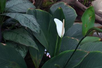 Exotic flowers. Botanical Garden in St. Petersburg. Tropical plants in the Botanical Garden of St. Petersburg.