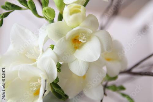 White freesia flowers bouquet stock photo and royalty free images white freesia flowers bouquet mightylinksfo