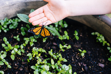 Childs hand touching butterfly