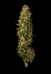 Marihuana bud on black background