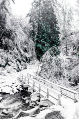 Bridge crossing river in snow covered forest