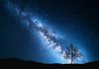 Milky Way and tree on the field. Little tree against night starry sky with blue milky way. Night landscape. Space background. Galaxy. Nature and travel background. Wilderness, wild nature